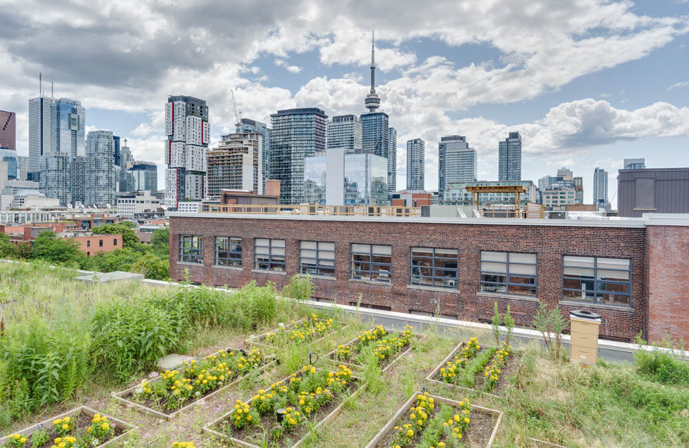Workhaus 215 Spadina Avenue - Rooftop Garden
